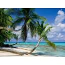 Douceur tropicale