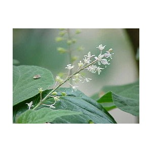 http://www.melissa-nature.fr/img/p/127-247-thickbox.jpg