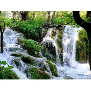 http://www.melissa-nature.fr/img/p/14-219-thickbox.jpg