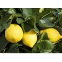 Senteur citronnée