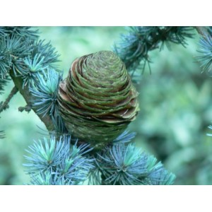 http://www.melissa-nature.fr/img/p/71-110-thickbox.jpg